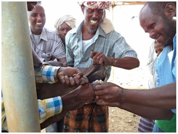 Training of Community Animal Health Worker (CAHWs) on Disease management in Iskushuban District of Puntland